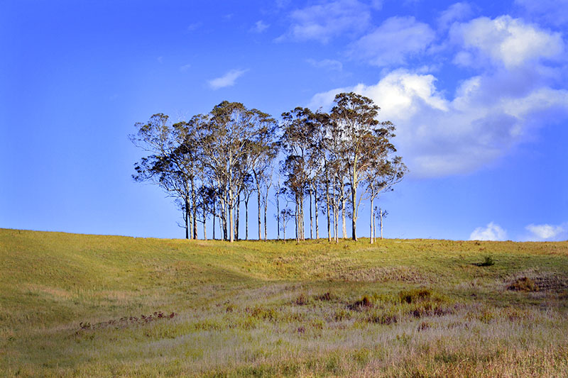 Nundle and the Werrikimbe National Park is On
