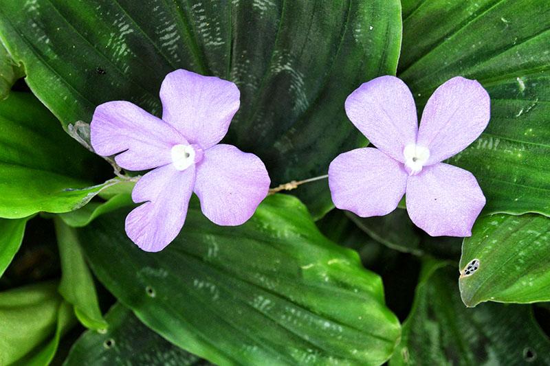 Botanical Gardens, Mt Coot – Tha, Brisbane: Queensland, Australia