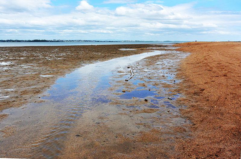 Wellington Point to King Island Walk: Queensland