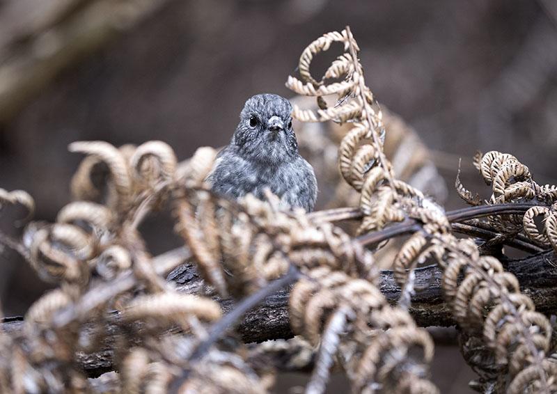 A Morning Birdwatching
